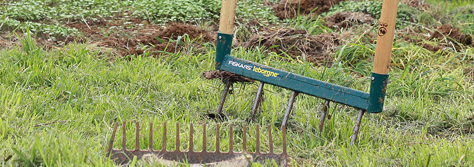 Grelinette leborgne plantée dans le sol